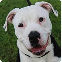 Adopt A Pet :: POLAR - Red Bluff, CA