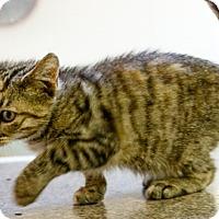 Adopt A Pet :: Honey - Oakland Park, FL