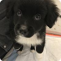 Adopt A Pet :: Leyla - Thousand Oaks, CA