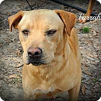 Adopt A Pet :: Farrah - Vancleave, MS