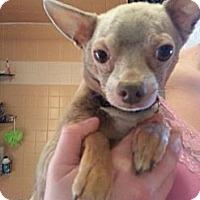 Adopt A Pet :: Surah - Gig Harbor, WA