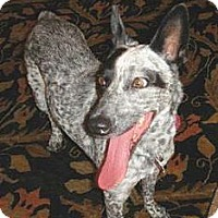 Adopt A Pet :: Laney - Adoption Pending - Phoenix, AZ