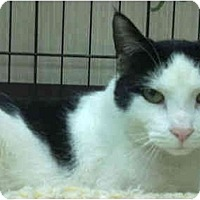 Adopt A Pet :: Baxter - Little Falls, NJ