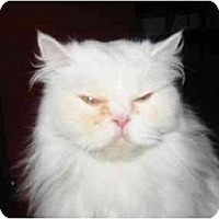 Adopt A Pet :: Jasper - Syracuse, NY