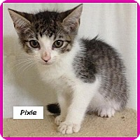 Adopt A Pet :: Pixie - Miami, FL