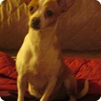 Adopt A Pet :: Antonia - Foster, RI