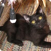 Adopt A Pet :: Wattkins - North Highlands, CA