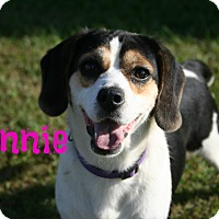 Adopt A Pet :: Minnie - Brazil, IN