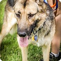 Adopt A Pet :: Taz - Phoenix, AZ