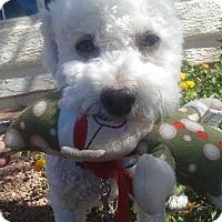 Adopt A Pet :: Alec - Las Vegas, NV