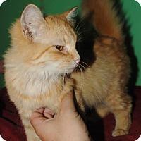 Adopt A Pet :: Calypso - McDonough, GA