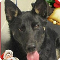 Adopt A Pet :: HITCHCOCK:Neutered- Low fees - Red Bluff, CA