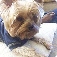 Adopt A Pet :: Jackson - Carmine, TX