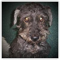 Adopt A Pet :: ROSIE - Medford, WI