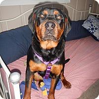 Adopt A Pet :: Darby - Alexandria, VA