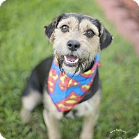 Adopt A Pet :: Will - Kingwood, TX
