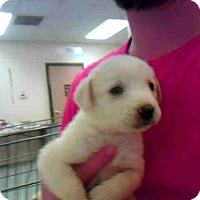 Adopt A Pet :: ROXY - Conroe, TX
