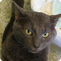 Adopt A Pet :: Gunpowder - Indianapolis, IN