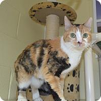 Adopt A Pet :: Thumbelina - Wheaton, IL