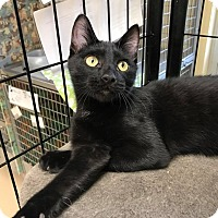 Adopt A Pet :: Decatur - Maryville, MO