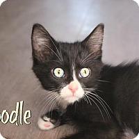 Adopt A Pet :: Toodle - Benton, LA
