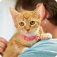 Adopt A Pet :: Shiloh - Homewood, AL