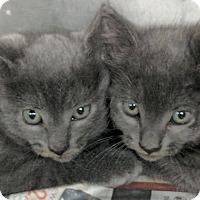 Adopt A Pet :: Mercury - Dickinson, TX