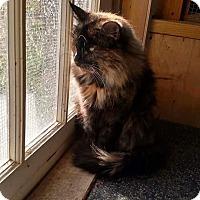 Adopt A Pet :: Kit Kat - Benton, PA