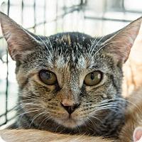 Adopt A Pet :: Rina - New York, NY