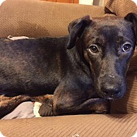 Adopt A Pet :: NICK - Cleveland, MS