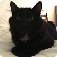 Adopt A Pet :: Shaggy - Brooklyn, NY