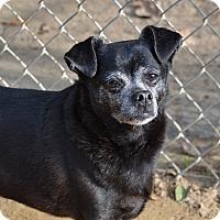 Adopt A Pet :: Petunia - Santa Barbara, CA