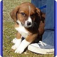 Adopt A Pet :: George - Staunton, VA