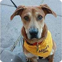 Adopt A Pet :: Bowie - Arlington, TX