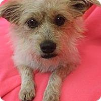Adopt A Pet :: Pixie Stick - Wytheville, VA