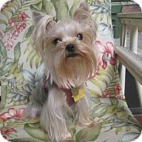Adopt A Pet :: MILA (Mee-la) - Leesburg, FL