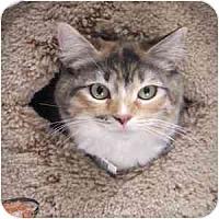 Adopt A Pet :: Delaney - Phoenix, AZ