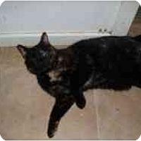 Adopt A Pet :: Betty Boo - Hamburg, NY