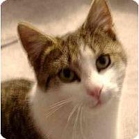 Adopt A Pet :: Juno - Plainville, MA
