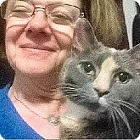 Adopt A Pet :: Punky - Atlanta, GA
