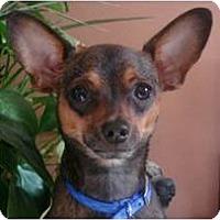 Adopt A Pet :: Louie - Cleveland, OH