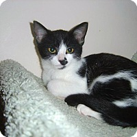 Adopt A Pet :: Izzy - Cleveland, OH