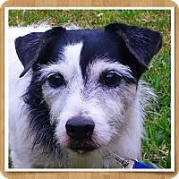 Adopt A Pet :: MURPHY - Terra Ceia, FL