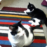 Adopt A Pet :: zz 'Sunny & Cher' courtesy post - Cincinnati, OH