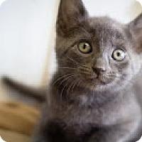 Adopt A Pet :: Roman - Coral Springs, FL