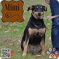 Adopt A Pet :: Mimi - Carlisle, TN