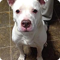 Adopt A Pet :: Emmanuel - Dayton, OH