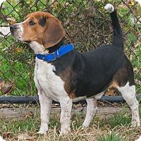 Adopt A Pet :: Bain - Elmwood Park, NJ