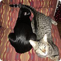 Adopt A Pet :: Ducky and Bucky - Nuevo, CA
