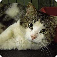 Adopt A Pet :: Larry - Marlinton, WV